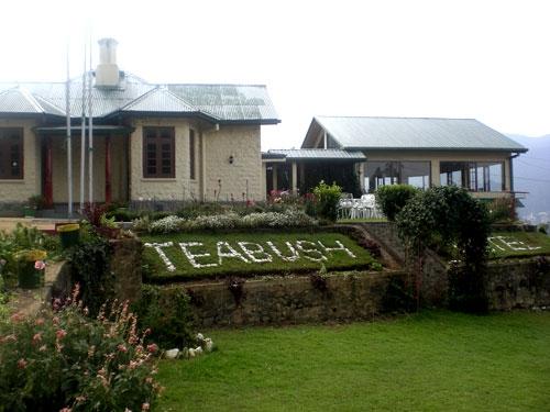 teabush-hotel 4