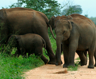 wildlife_sri_lanka_3